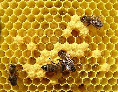 В Киеве пройдет масштабный Конгресс пчеловодов