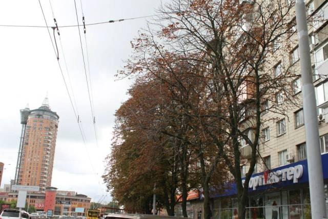 Киев теряет каштаны