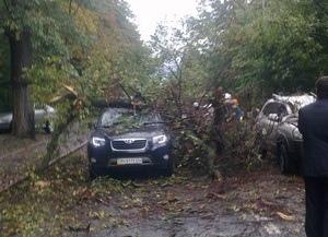 На проезжающие машины по Парковой аллее упало дерево
