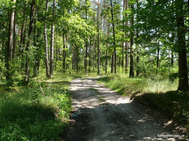 В Киеве собираются озеленить зеленый лес