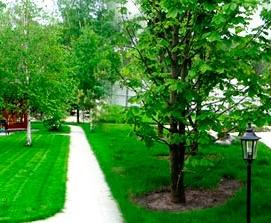 Крупномерные деревья гораздо выгоднее молодых саженцев