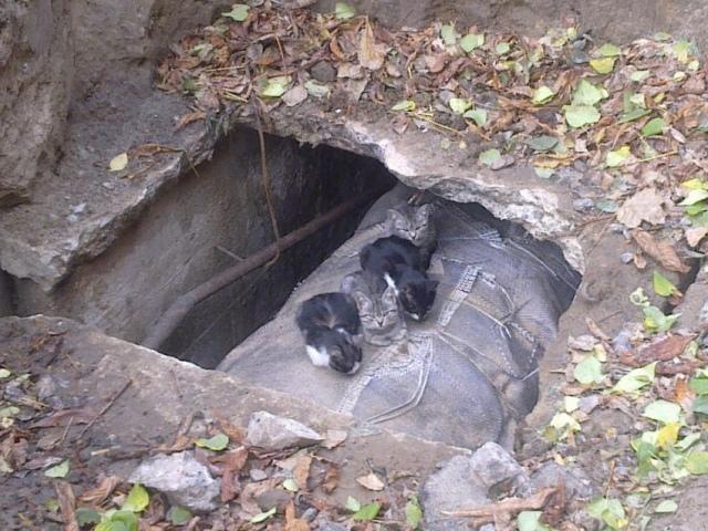 Киевляне решили предотвратить убийство котят