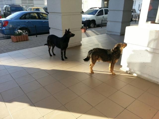 Бездомные собаки загоняют киевлян в автомобили
