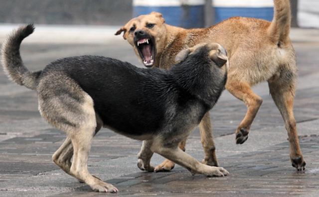 На Дарнице бездомных псов посадят в клетки