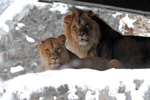Посмотреть как зимой мерзнут звери в зоопарке можно за полцены
