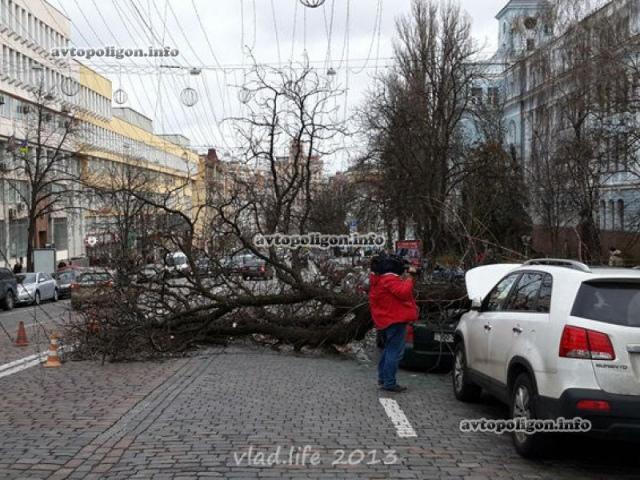 Упавшее дерево сильно помяло две иномарки в Киеве