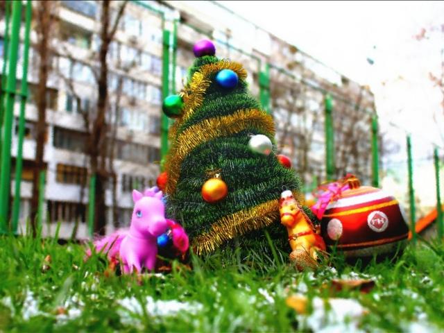 Попов поинтересовался у киевлян, где установить елку?