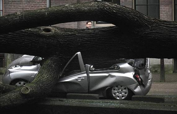 Киевских водителей просят не парковаться под деревьями