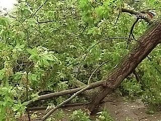 Спасатели предотвратили падение дерева на людей