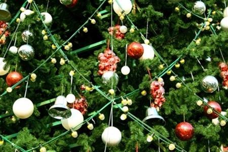 15 декабря в Киеве начнут продавать елки