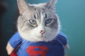 Верный кот спас жизнь заснувшей киевлянке