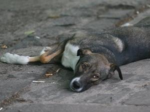 В Киеве снова убивают собак
