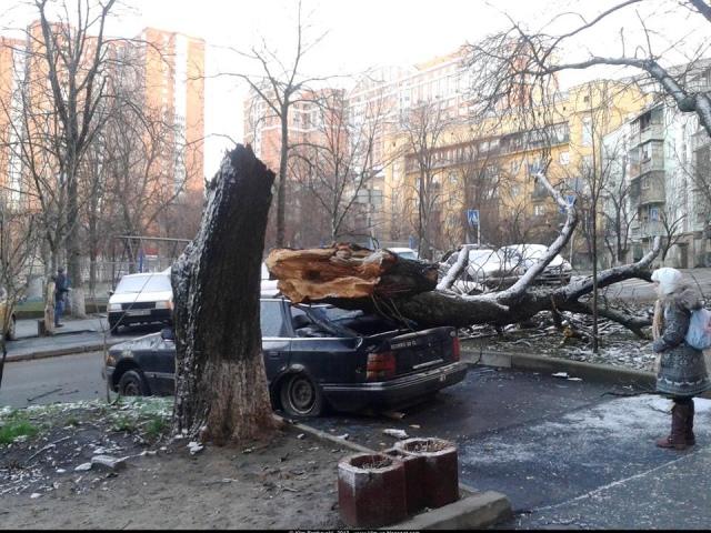 Возле столичной гимназии на старенький автомобиль обломилось дерево