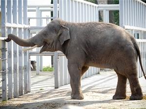 Влюбленных в слона киевлян приглашают в зоопарк