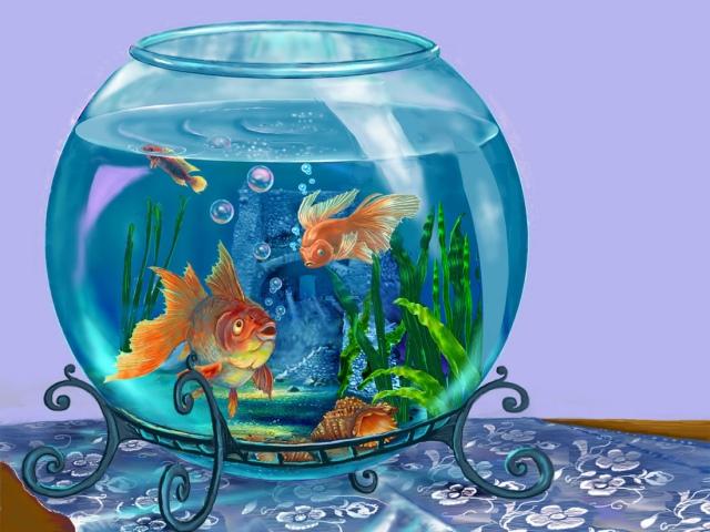 Какой аквариум выбрать для рыбок?