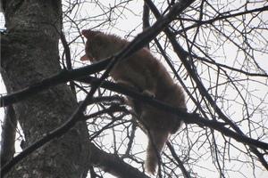 Ради кота-отшельника спасателям пришлось резать дерево