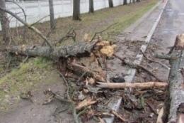 В Киеве падали деревья - пострадала женщина