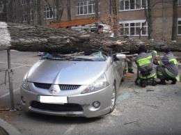 На Печерске непогода повредила автомобиль и деревья