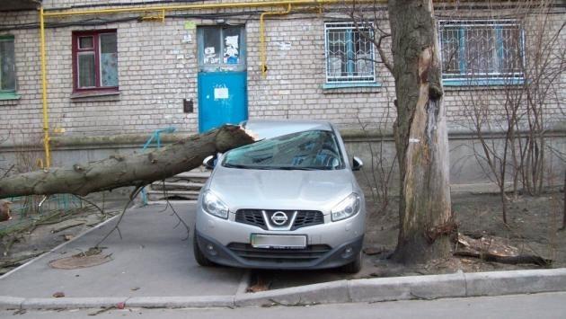 Дерево наказало киевлянина за парковку в недозволенном месте