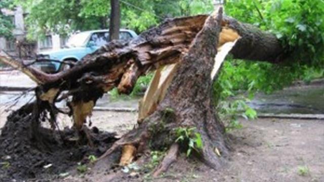 В Киеве возле больницы на ребенка упало дерево