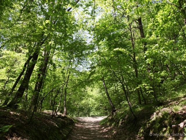 Кабмин через полтора года согласился спасти Беличанский лес
