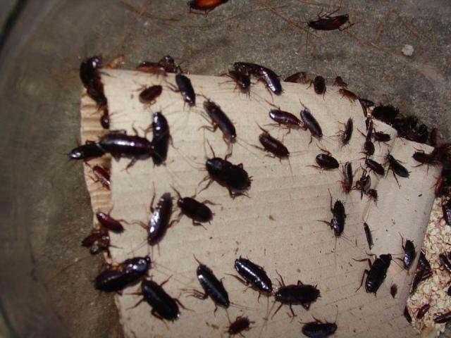 В киевскую мэрию могут прислать тараканов