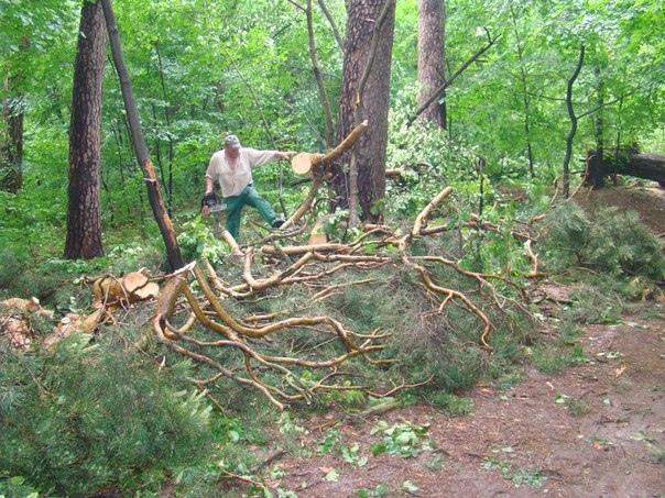 """В столице уничтожают природоохранную зону возле станции метро """"Сырец"""""""