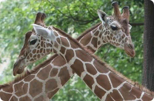 1 июня дети до 16 лет смогут бесплатно попасть в зоопарк