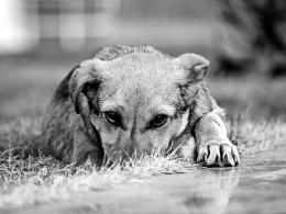 Спасатели выручили пса, просидевшего 2-3 дня в бетонной ловушке