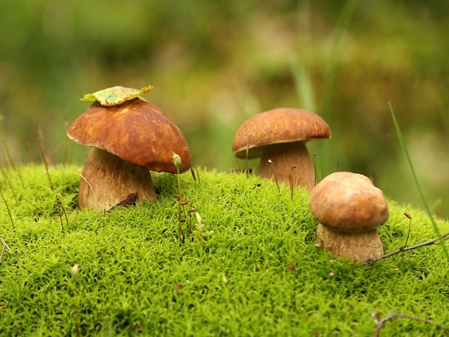 На Киевщине ребенок отравился собранными грибами