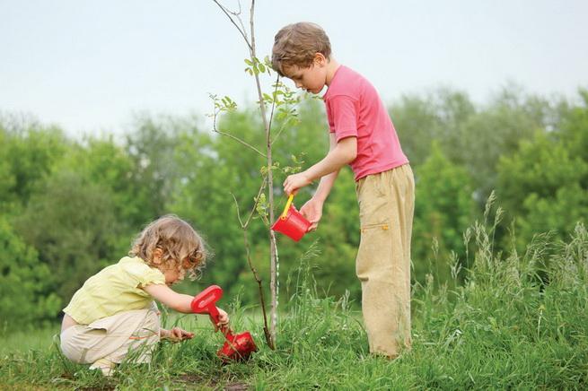 Киевляне смогут сажать деревья через Интернет