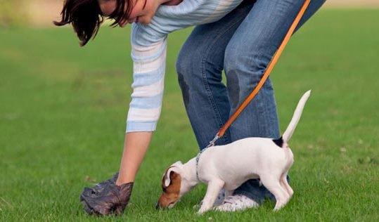 Киевлян могут обязать убирать за своими собаками на улице