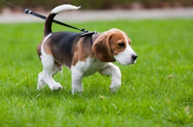 На Оболони из участка для выгула собак создадут сквер