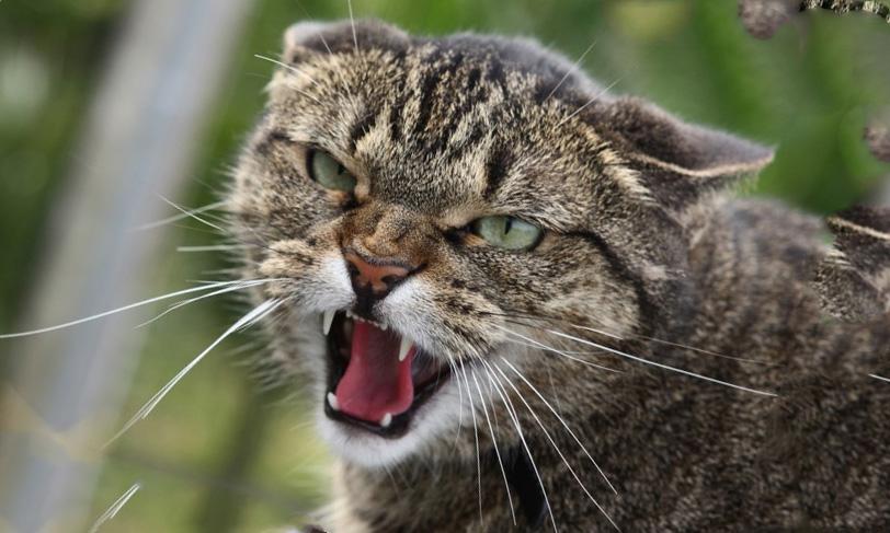 Киевлян стали чаще кусать псы и коты