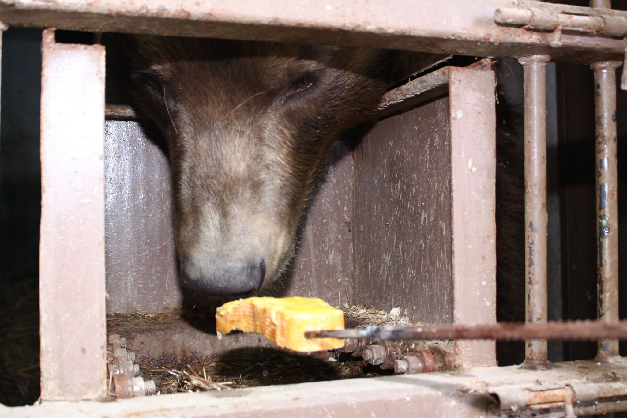 Посетители зоопарка под Киевом едва не убили медведя