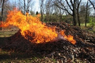 Дворникам запрещено сжигать опавшую листву