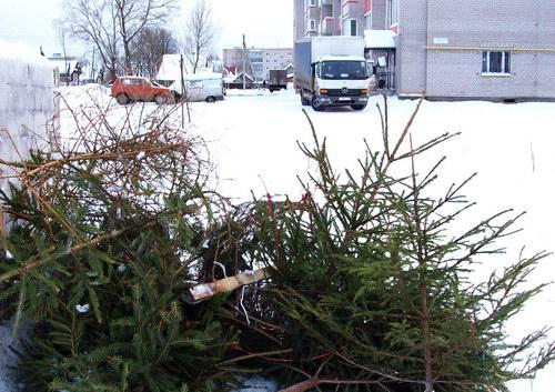В Киеве открыли утильпункты старых елок