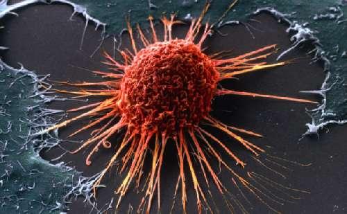 Распространенные мифы о раке