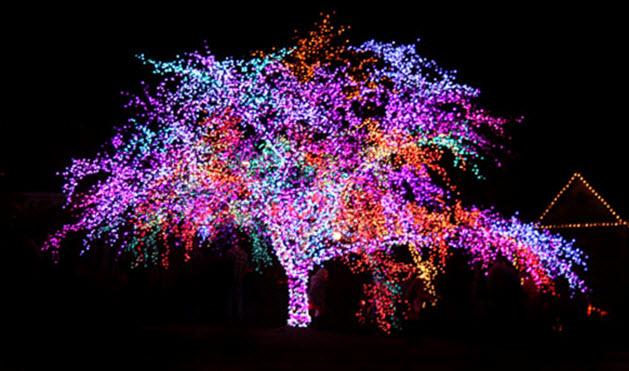 В мае на улицах Киева появятся деревья с подсветкой