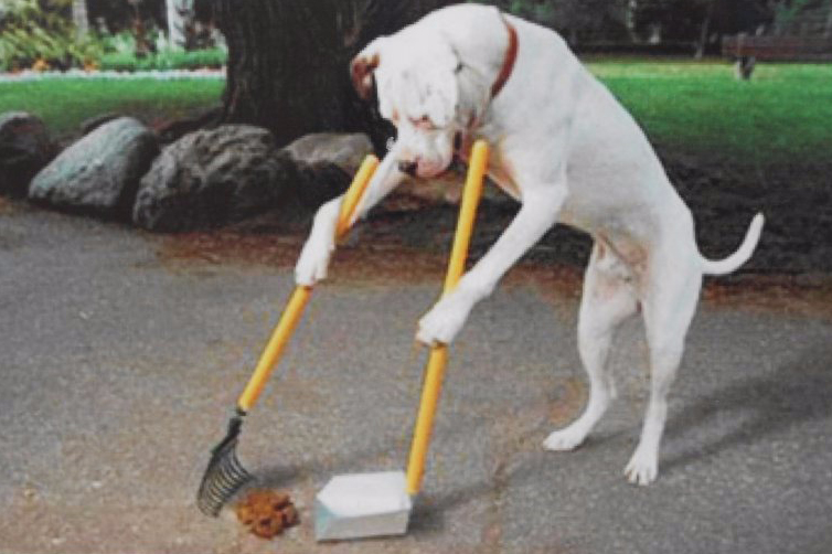 Через три недели все городские парки должны сиять чистотой - Кличко