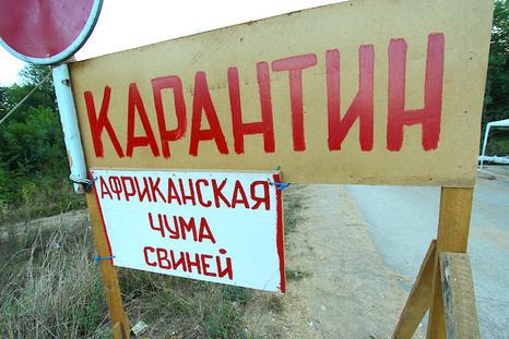 На Киевщине вспышка чумы