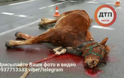 В Киеве лошадь попала под автомобиль