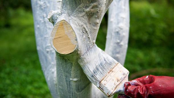 В Киеве не будут белить деревья и бордюры