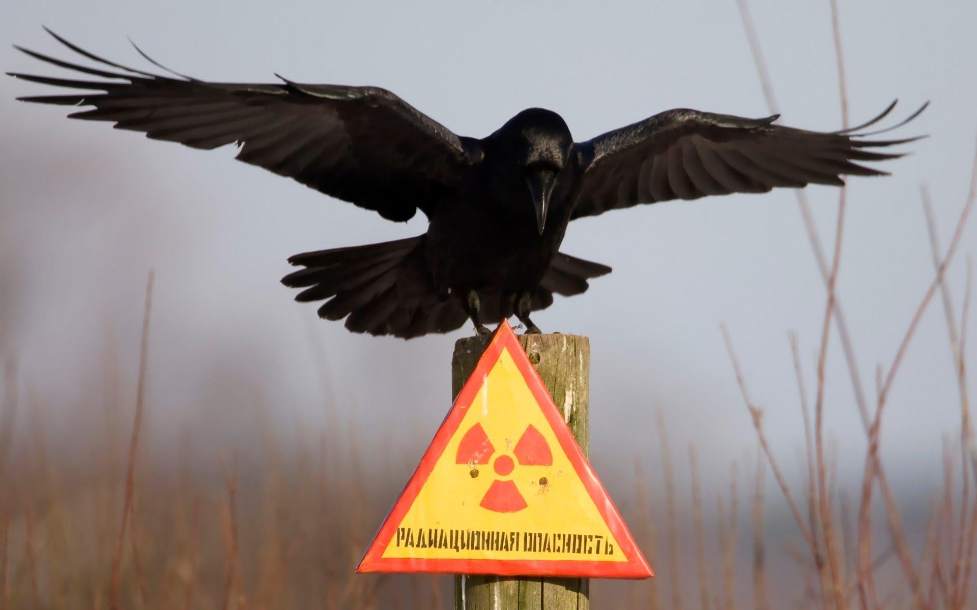В КГГА предлагают выбрасывать мусор в Чернобыль