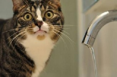 В трех районах Киева до 24 апреля отключили горячую воду