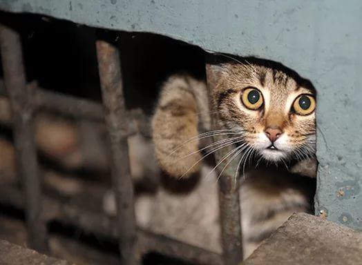 В Дарницком районе Киева появится мини-отель для кошек и собак