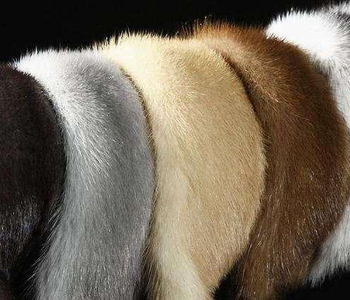 Животные шкуры: в дизайне интерьера
