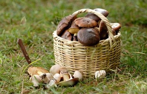 Шестеро киевлян отравились грибами