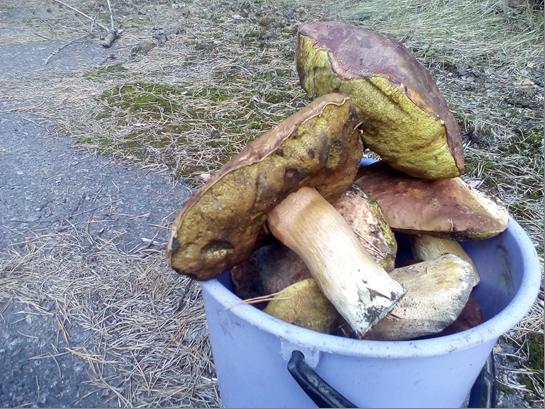 Под Киевом поймали мужчин с радиоактивными дарами леса