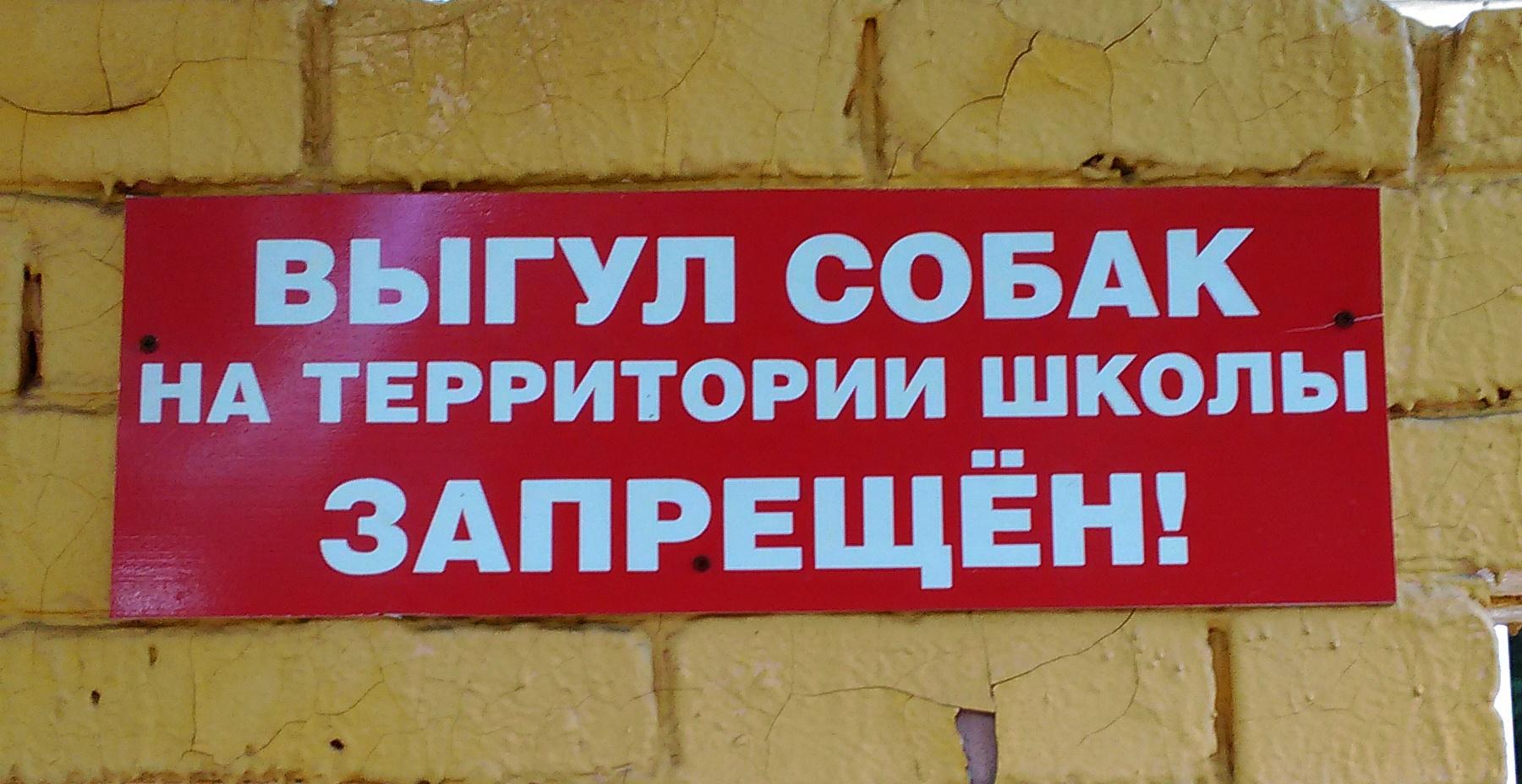 Киевлянам запретили гулять с собаками на территориях школ